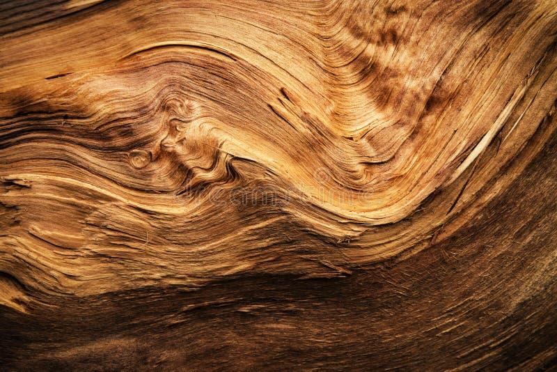 Detalle abstracto de una madera ondulada de la fractura imagen de archivo libre de regalías