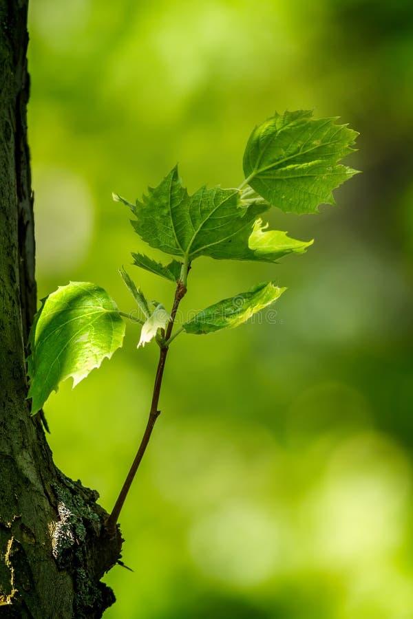Detalle armonioso del bosque, con las hojas planas fotografía de archivo