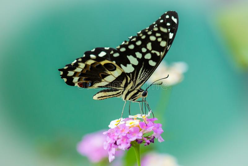 Detalle ascendente cercano de la mariposa fotos de archivo