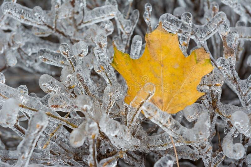 Detalle canadiense del invierno foto de archivo