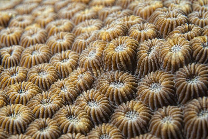 Detalle coralino duro imagen de archivo