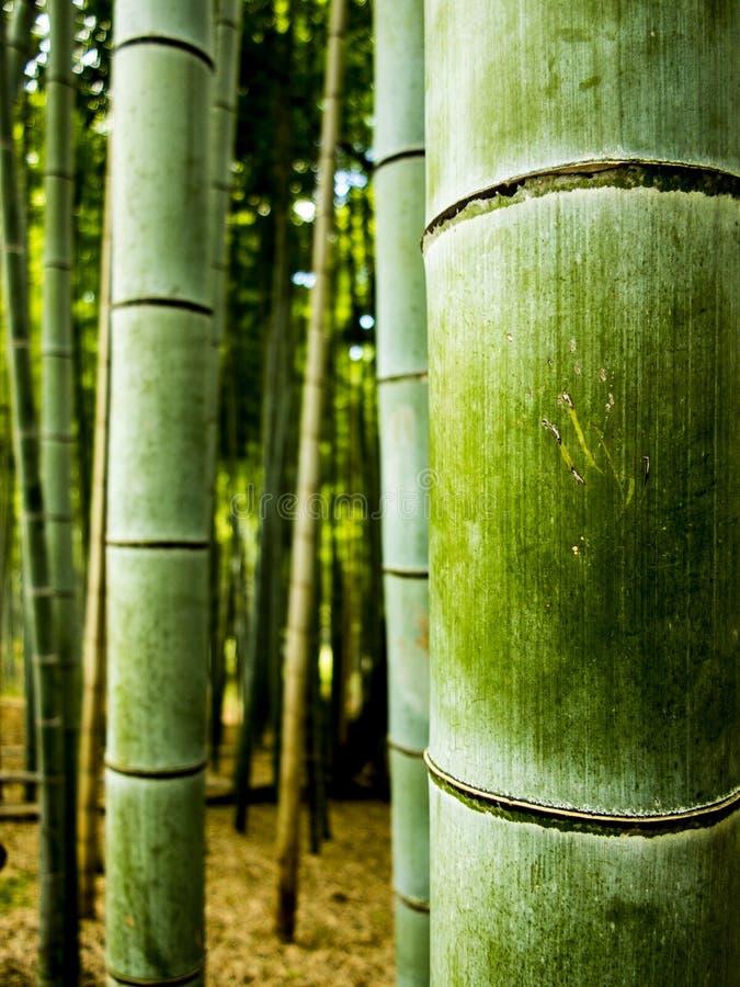 Detalle de bambú del bosque foto de archivo