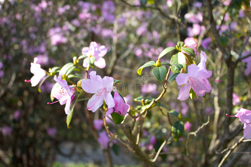 Detalle de flores rosadas foto de archivo