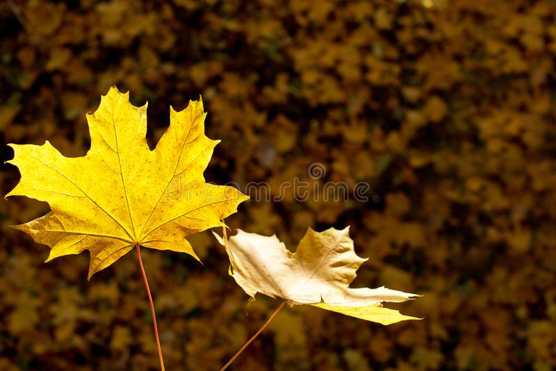 Detalle de hojas imagen de archivo