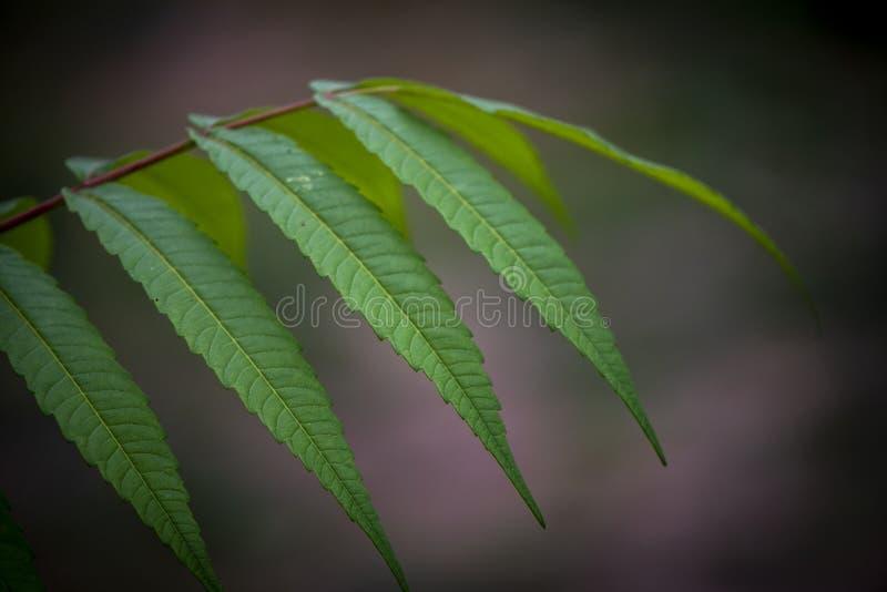 Detalle de hojas verdes de las ramas del helecho fotos de archivo libres de regalías