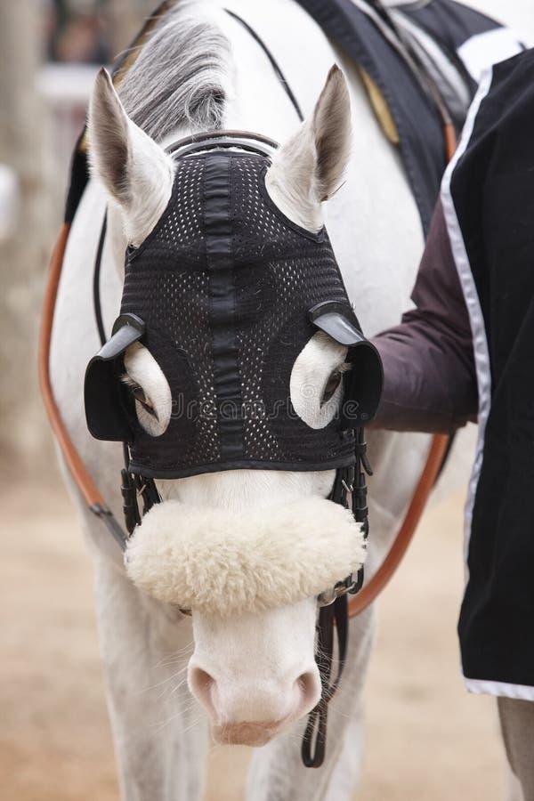 Detalle de la cabeza de caballo de raza con los intermitente Área del prado imagenes de archivo