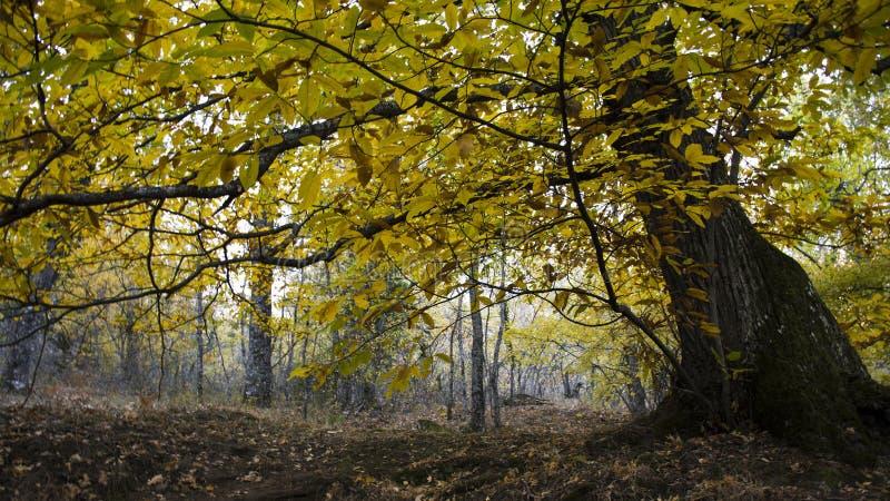 Detalle de la castaña en el bosque en otoño imágenes de archivo libres de regalías