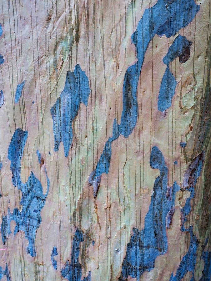 Detalle de la corteza del eucalipto de la goma azul, Australia fotos de archivo