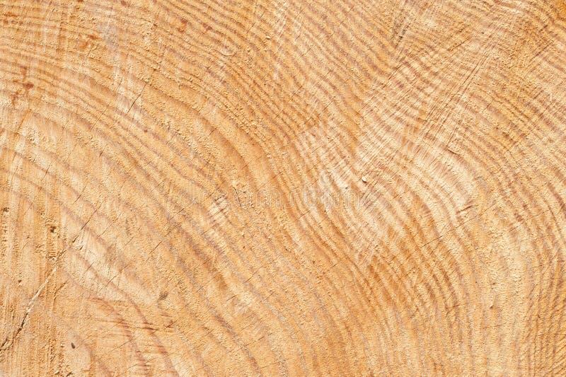 Detalle de la corteza del tronco de árbol imagen de archivo libre de regalías