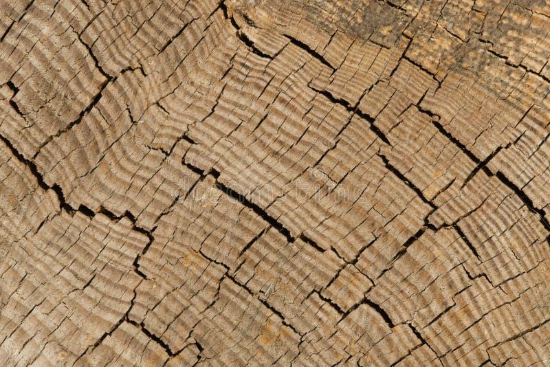 Detalle de la corteza del tronco de árbol fotos de archivo