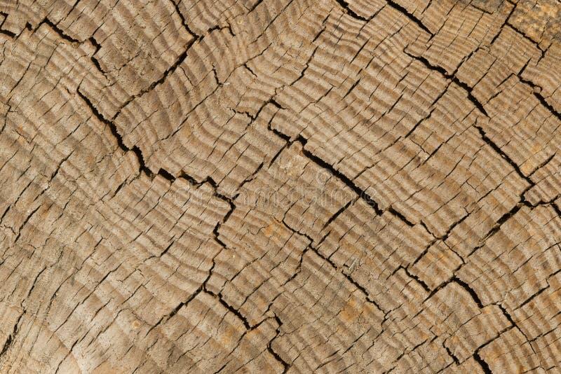 Detalle de la corteza del tronco de árbol foto de archivo libre de regalías