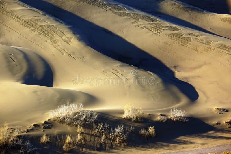Detalle de la duna de arena foto de archivo