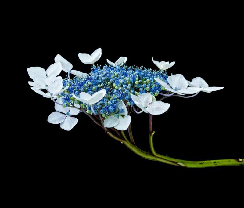 Detalle de la flor fotos de archivo