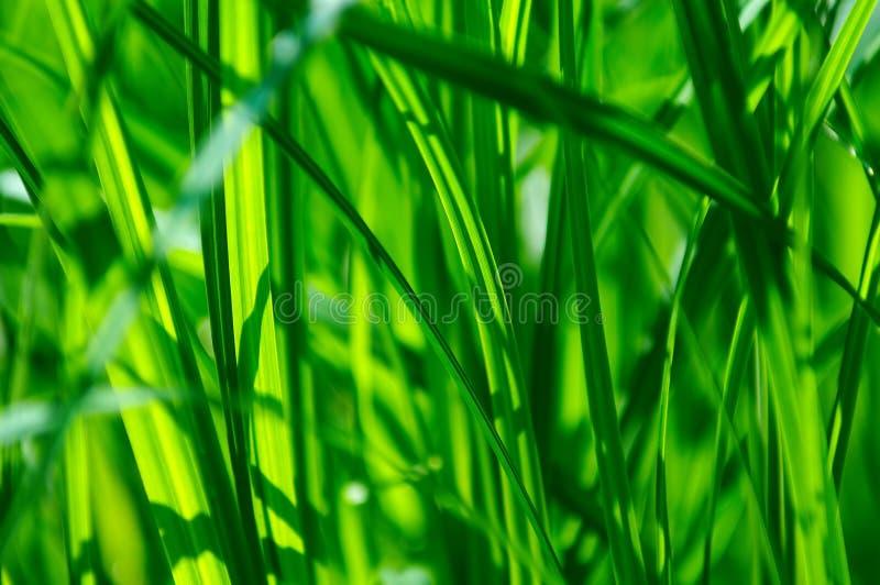 Detalle de la hierba verde fotografía de archivo