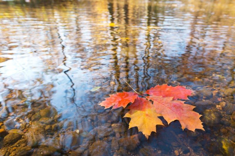 Detalle de la hoja en el otoño imagenes de archivo