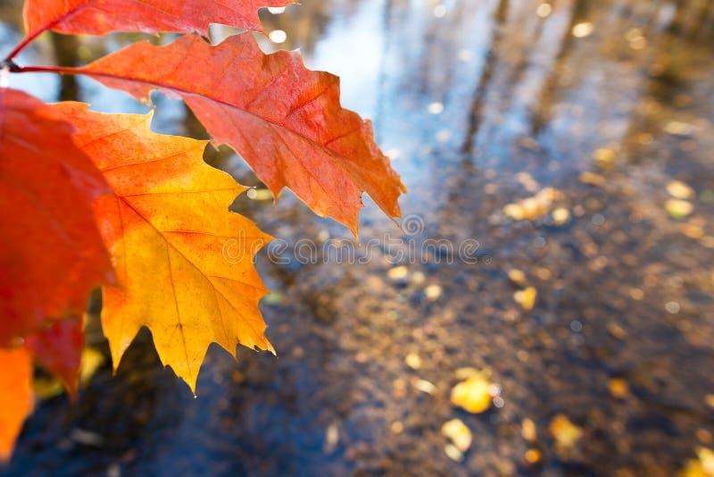 Detalle de la hoja en el otoño foto de archivo