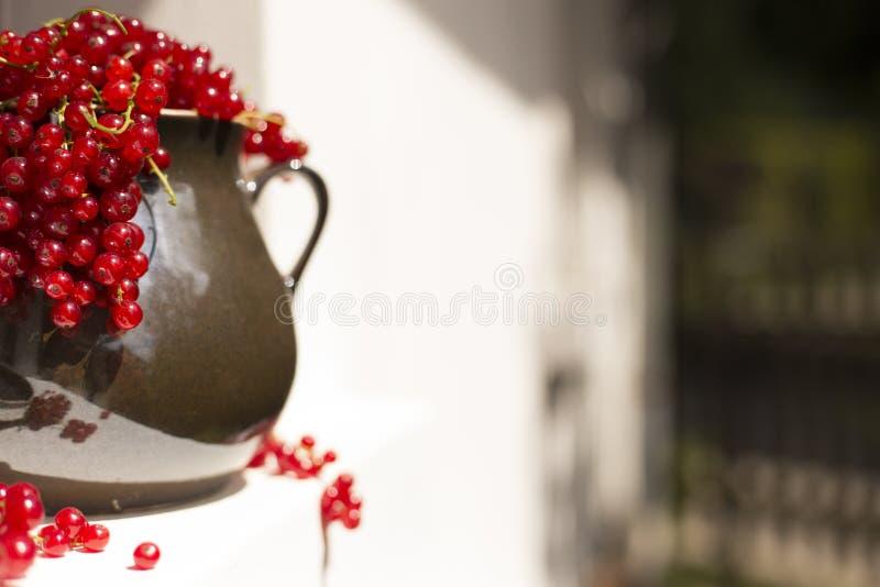 Detalle de la jarra/del jarro del redcurrant en una luz del sol directa en una ventana imagen de archivo