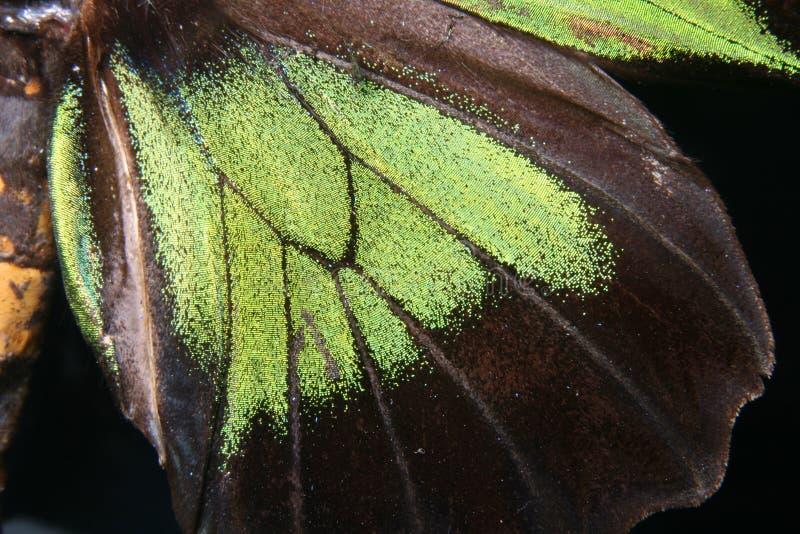 Detalle de la mariposa foto de archivo