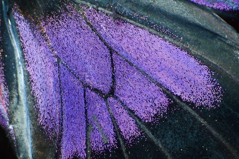 Detalle de la mariposa imagenes de archivo