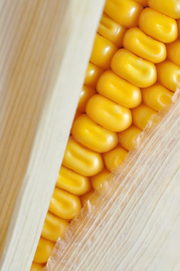 Detalle de la mazorca de maíz imagenes de archivo