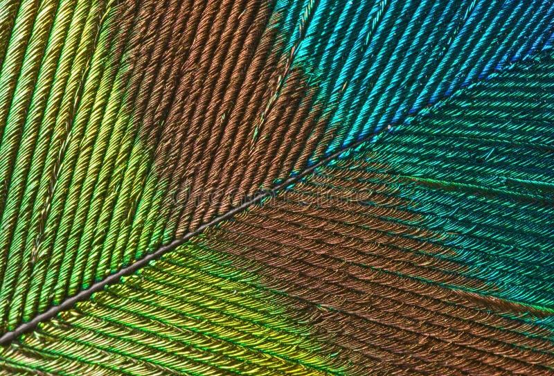 Detalle de la pluma del pavo real fotografía de archivo libre de regalías