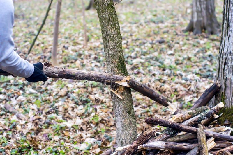 Detalle de la rama quebrada para la destrucción a de la tormenta fotografía de archivo libre de regalías