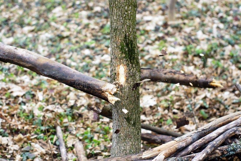 Detalle de la rama quebrada para la destrucción a de la tormenta fotografía de archivo