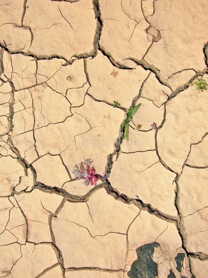 Detalle de la tierra seca de la marga fotos de archivo