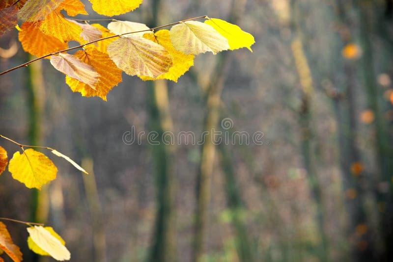 Detalle de las hojas de la naranja en el bosque imágenes de archivo libres de regalías