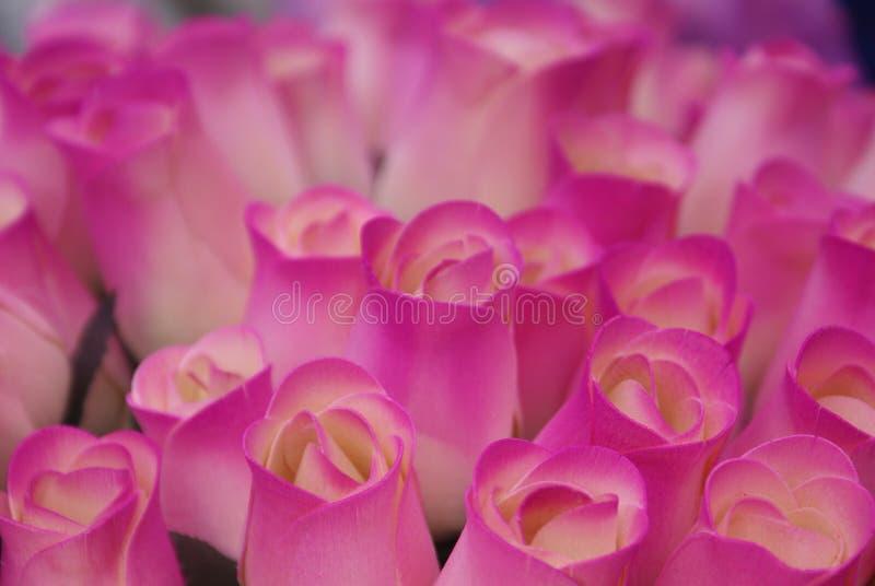 Detalle de las rosas rosadas hechas a mano hechas de la madera reciclada imágenes de archivo libres de regalías