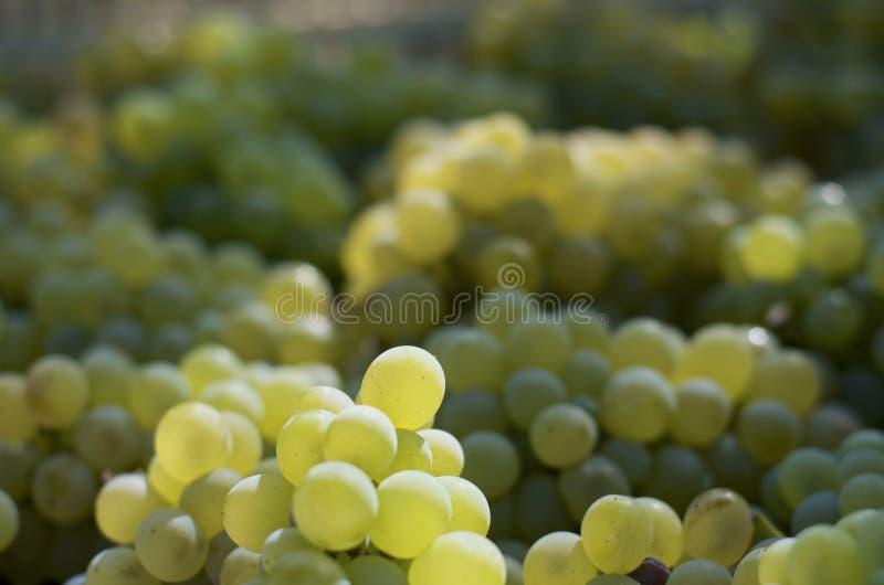 Detalle de las uvas blancas imagen de archivo