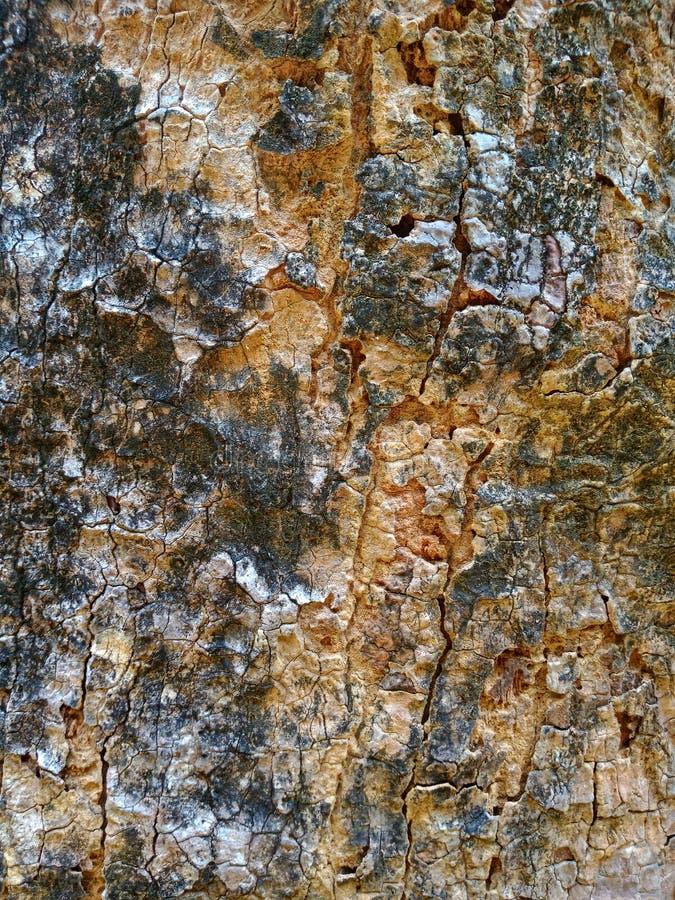 Detalle de madera del árbol de la textura fotos de archivo