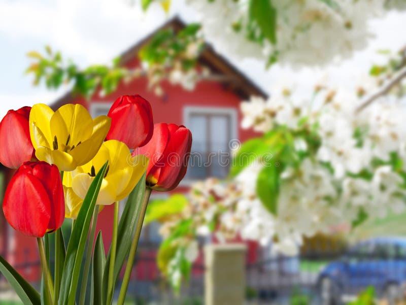 Detalle de tulipanes con una casa fotografía de archivo