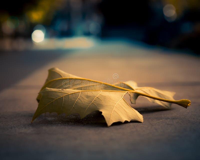Detalle de una hoja del otoño fotos de archivo