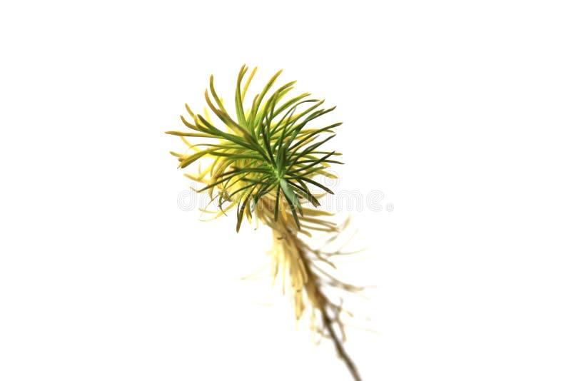 Download Detalle De Una Pequeña Planta Foto de archivo - Imagen de tazas, imaginación: 41900768