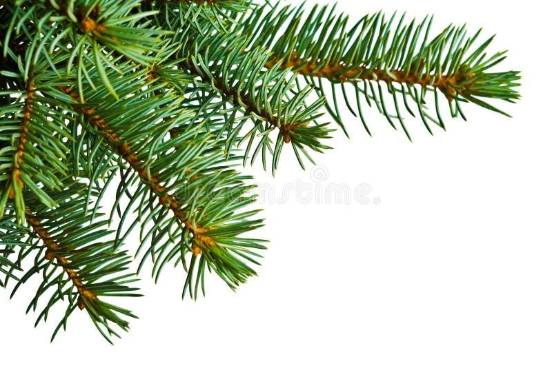 Detalle del árbol de navidad en blanco imagen de archivo