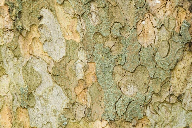 Detalle del árbol plano imagenes de archivo