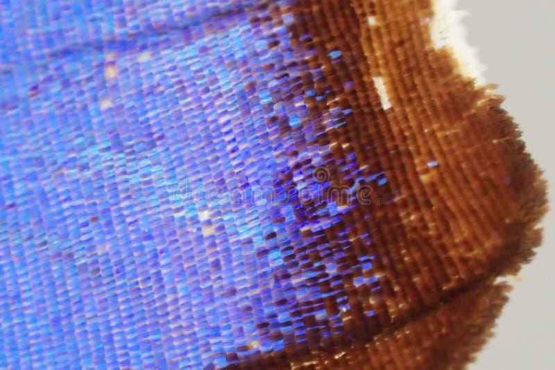 Detalle del ala de la mariposa imagen de archivo