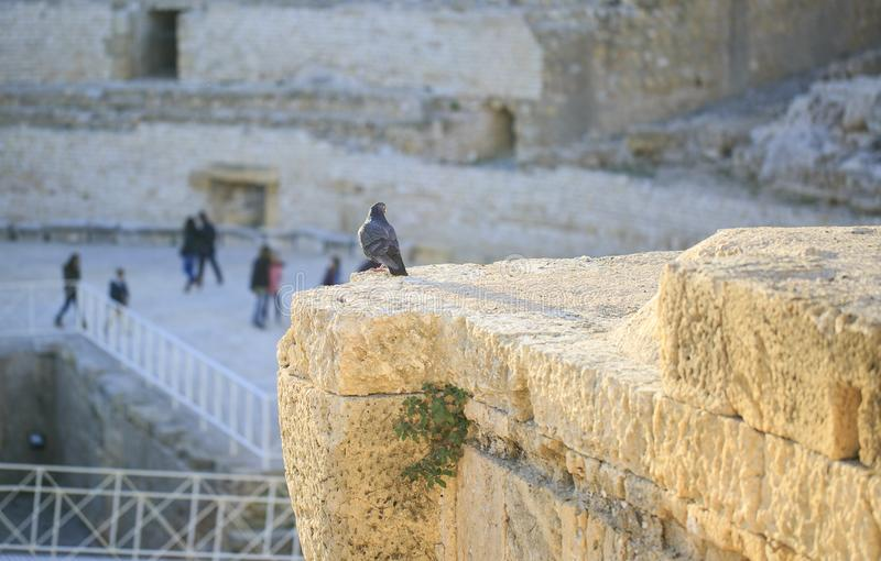 Detalle del anfiteatro localizado en Tarragona, España imagen de archivo libre de regalías