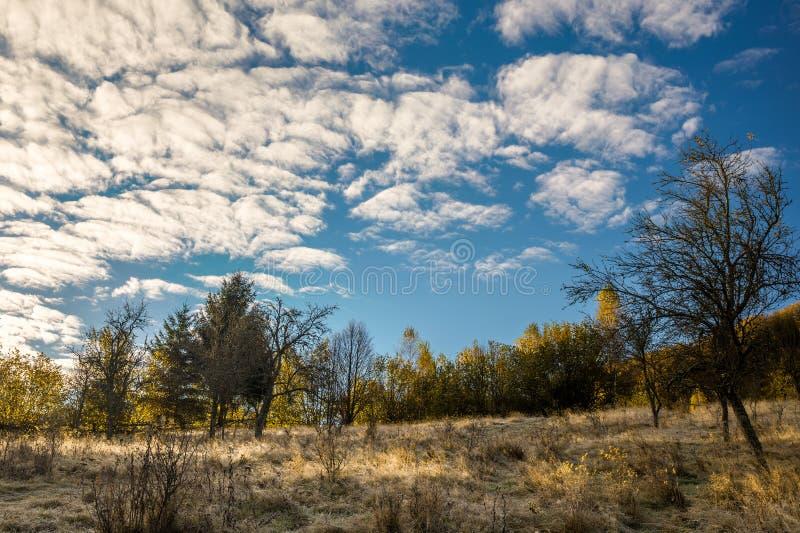 Detalle del bosque en último otoño fotos de archivo libres de regalías