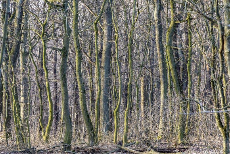 Detalle del bosque en Viena imagen de archivo libre de regalías