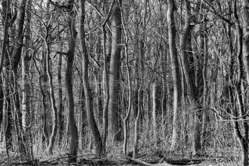 Detalle del bosque en Viena foto de archivo libre de regalías