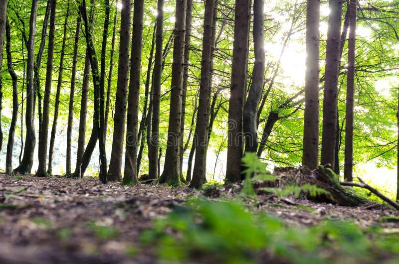 Detalle del bosque verde foto de archivo