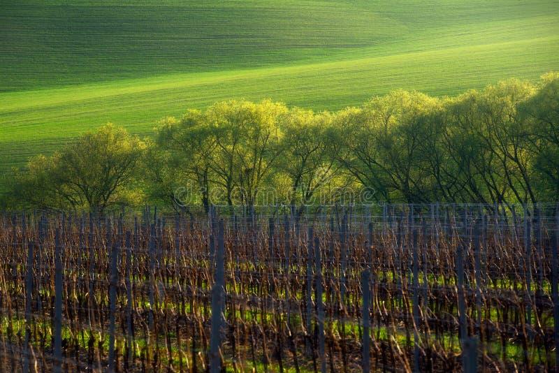 Detalle del campo del sur de Moravian, República Checa imagen de archivo libre de regalías