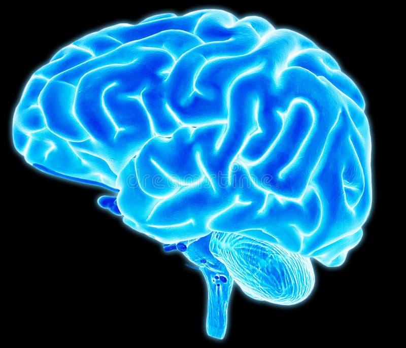 Detalle del cerebro ilustración del vector