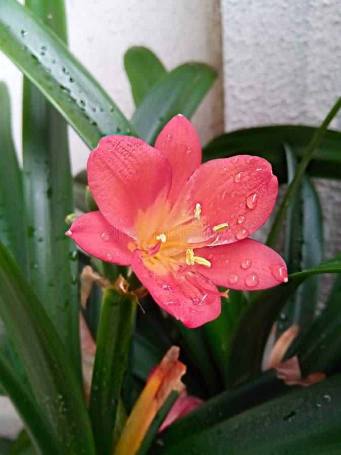 Detalle del florecimiento después de lluvia fotografía de archivo libre de regalías