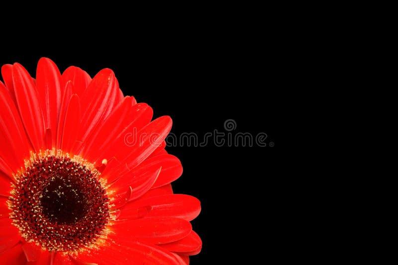 Download Detalle Del Gerbera En Negro Foto de archivo - Imagen de negro, decoración: 1282652