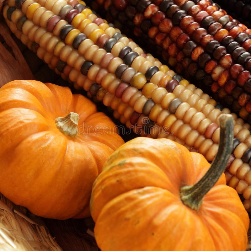 Detalle del otoño imagen de archivo libre de regalías