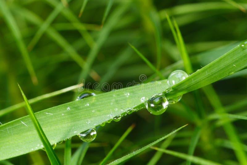 Detalle del rocío de la hierba imagenes de archivo