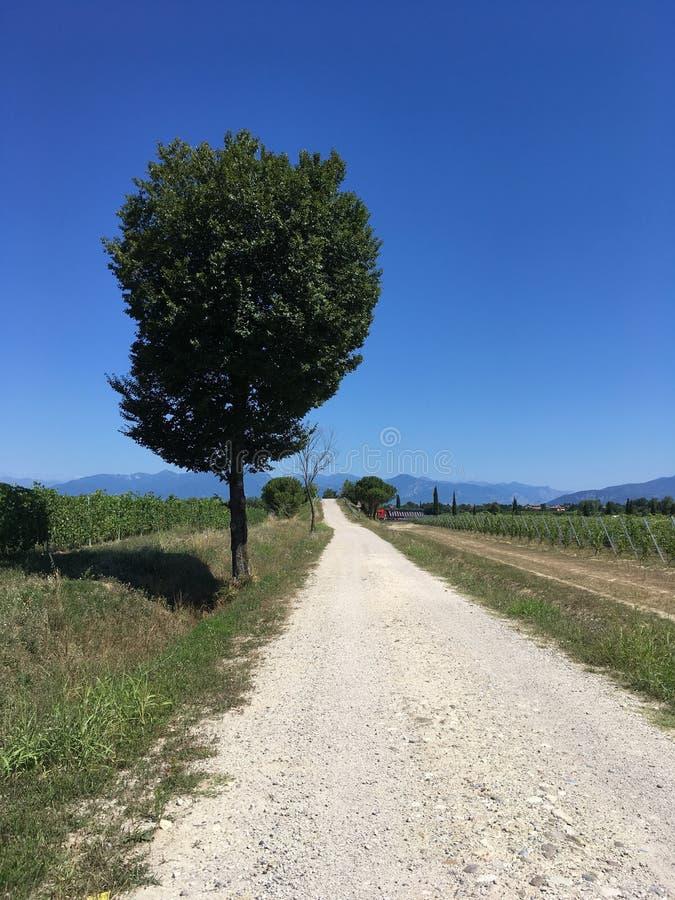 Detalle del viñedo en el verano imagenes de archivo